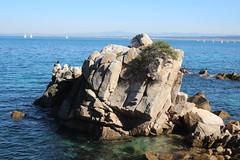 IMG_7647 (mudsharkalex) Tags: california pacificgrove pacificgroveca