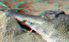 Blijdorp Zoo Rotterdam 3D (wim hoppenbrouwers) Tags: blijdorp zoo rotterdam 3d anaglyph stereo redcyan crocodile