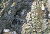 Bempton Cliffs (Glenn Pye) Tags: bemptoncliffs gannet birds bird wildlife nature nikon nikond7200 d7200