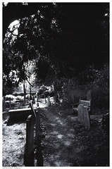 Churchyard (peterphotographic) Tags: img024edwm parishchurchofstjohnathampstead hampstead northlondon london england uk britain church churchyard cemetery grave graveyard gravestone tombstone tomb path bench tree shadow contrast xp2 disposable disposablecamera blackandwhite bw monochrome scanned film 35mm analog