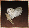 B Is For Bella Doing What She Does Best (marilyntunaitis) Tags: bella alphabet papertowelroll