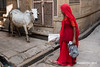 Cow in red (Pepe Soler Garcisànchez) Tags: rajasthan jaisalmer india rx100m3 rx100iii sonnar sony zeiss zeisslenses