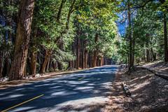 Yosemite.Road.2600p.244 (l.dardennes) Tags: yosemite yosemitenationalpark california usa canoneos7dmarkii sigma1750mmf28 yosemitevalley étatsunis us