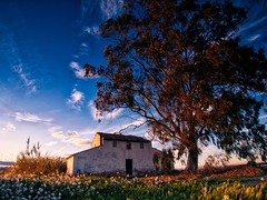 The house with no name. (toniant67) Tags: house tree oldhouse landscape grass sunset
