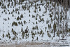 Mysterious Tipi (kevin-palmer) Tags: bighornmountains bighornnationalforest wyoming march spring winter snow snowy cold morning pinestrees tipi tepee burnt sheepmountain nikond750 tamron2470mmf28