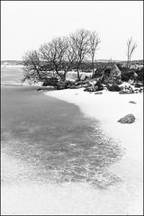 Rock and a Hard Place (Geoff France) Tags: frozen tree water sky landscape scottishlandscape mono monochrome monochromelandscape blackandwhite black white landscapelochlakemerelochanrannochrannoch moor