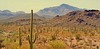 STOP INVITING WALLS INTO WIDE OPEN SPACES  ~Buddy Wakefield (Irene2727) Tags: landscape scape pano panorama desert cactus cacti brush mountain nature outside organpipecactus saguarocactus coth5