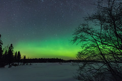 northern lights 2 (katrinlillenthal) Tags: landscape nature night northernlights stars winter snow tree nopeople green cold outdoor