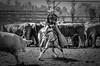 20030913_125 (dc2photo) Tags: ncha ocha ontario cowboy cutting equine horse qh quater sport western