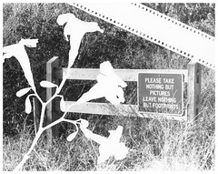 take nothing but pictures. (frommyperspectiv) Tags: florida takenothingbutpictures leavenothingbutfootsteps 35mm film canon canoneosrebelg nature lovenature photogram monochrome blackandwhite bw kentmere400iso kentmere400 kentmere 400iso