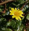 Love Spring (northdevonfocus) Tags: spring springflowers wildflowers less nature flower