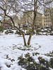 """Snow Storm Spring 2018 Hits and Covers NYC LES (nrhodesphotos(the_eye_of_the_moment)) Tags: p32300053001084 """"theeyeofthemoment21gmailcom"""" """"wwwflickrcomphotostheeyeofthemoment"""" manhattan nyc les spring2018 tree foliage snow buildings outdoors bark bushes hedges"""