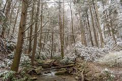 Snow dusting of an Appalachian forest (sniggie) Tags: appalachia cumberlandgapnhp cumberlandgapnationalhistoricpark cumberlandmountains kentucky snow winter nationalregisterofhistoricplaces mountainscenery rhododendron tsugacanadensis easternhemlock creek forest appalachianforest evergreen