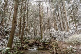 Snow dusting of an Appalachian forest
