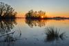 Sonnenuntergang Elbe Naturschutzgebiet (PhotoChampions) Tags: sunset sonnenuntergang river fluss elbe hamburg sun sonne silhoutte water wasser blue blau yellow gelb trees bäume horizon horizont germany deutschland sky himmel red rot orange