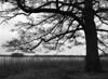 Aldershvile park - elletræ (holtelars) Tags: asahi pentax 645 pentax645 645n 6x45 smcpentaxfa 4585mm f45 120 film 120film foma fomapan fompan200 fompan200creative 200iso mediumformat analog analogue blackandwhite classicblackwhite bw monochrome filmforever ishootfilm filmphotography xtol homeprocessing larsholte aldershvile slotsruin ruin bagsværd danmark denmark alder tree