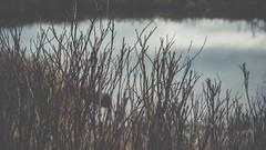 PB_012618_23 (losing.today) Tags: brianyoung oregon pacificnorthwest portland pdx portlandoregon portlandor winter nature outdoors naturepark plantlife plants moodyseason darkseason losingtoday