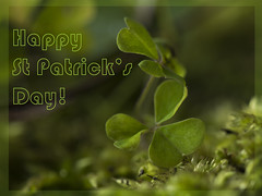 Happy St Patrick's day! (Wendy:) Tags: trefoil shamrock clover green card nationalday stpatricksday ireland greetings odc