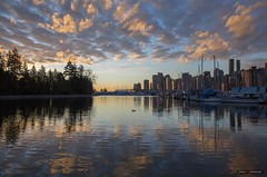 The Calm Of The Morning (Clayton Perry Photoworks) Tags: vancouver bc canada winter explorebc explorecanada clouds reflection skyline coalharbour stanleypark bird