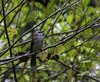 20180218-0I7A3689 (siddharthx) Tags: sungeibulohwetlandreservecanon7dmkiief100400mmf4556lisiiusmnaturelandscapetreewatersingaporewildlifemigratorybirdssgvulnerablemangroveswetlandsmarshnparksbuzz yellowventedbulbul bulbul sungeibulohwetlandreservecanon7dmkiief100400mmf4556lisi singapore sg sungeibulohwetlandreserve canon7dmkii ef100400mmf4556lisiiusm nature landscape tree water wildlife migratorybirds vulnerable mangroves wetlands marsh nparksbuzz