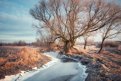 In the first rays (xkolba) Tags: tree river warmlight mood podlasie frost floe winter landscape riverbank water frozen ice poland old willow sunrise