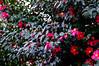 Flowers (ademilo) Tags: flowers flower tokyo japan nature n