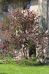 (the last don) Tags: schaffhausen switzerland tree