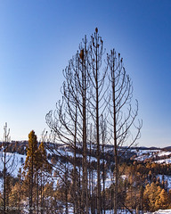 Custer Park 20180223-0063 (Photos By Bob Van) Tags: blackhills csp custerstatepark landscape snow southdakota winter custer unitedstates us