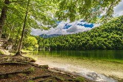 Summer lake (icemanphotos) Tags: summer pine sunrays clear mountain solitude traveldestination