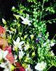 📷  #Photography #Photographylife #Photographer #Photographerlife . . . . #green #greenery #grass #flower #flowers #💐 #garden #hd #hdr #camera #mobilecamera #focus #pictureperfect #photoshoot #picoftheday #nature #natural #photooftheday #pin (carkguptaji) Tags: naturelove natural mobilecamera whiteflowers instafamous focus photographer instafollow garden photographerlife naturelover photographylife nature hdr naturelovers photooftheday grass picoftheday flower photography green photoshoot instafame pictureperfect camera greenery pinterest hd flowers
