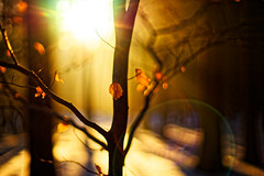 #178 - Sunset in the forest / Lesní západovka (photo.by.DK) Tags: forest intheforest woods woodsonfire sunset sunsetintheforest sunshine lensflare flare bokeh bokehlicious beyondbokeh oldlens manuallens manualfocus manual manualondigital planar planar50 planar5014 carlzeiss zeiss lens carlzeissplanar carlzeissplanar5014 contax contaxyashica cy artbydk photobydk