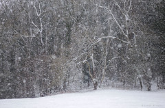 Fortress (Sarah_Brooks) Tags: snow chaos snowing snowy minibeastfromtheeast winter landscape woodland trees treescape