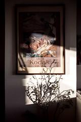 Take a Kodak with You (zeilenzunder) Tags: plants flower home bild kodak poster light