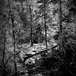 Bridge in the Wood thumbnail