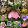 Shivering Spring (Tölgyesi Kata) Tags: füvészkert botanikuskert botanicalgarden withcanonpowershota620 budapest spring macro flower mozaik mosaic tavasz fleur virág