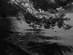 diffuse light at a lake (pancolar user) Tags: canon canonphotography canong16 sverige småland lake pines sweden blancoynegro blackwhite schwarzweis czarnobiałe biancoenero noiretblanc svartvitt sortoghvid zwartwit zww