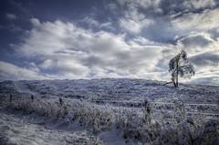 Lonley Frozen Tree (dc2photo) Tags: hdr ontario icestorm landscape portfolio rural top25 winter