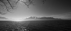 "Le Lac Léman et les Alpes (Svend RS) Tags: 1224mm40 fe1224mmf4g sel1224g zoom wideangle ultrawideangle blackandwhite monochrome noiretblanc ""artinbw"" biancoenero blancoynegro streetphotography landscape mountain nature sonyilce7m3 sonya7 alpha a7m3 sonya7lll"