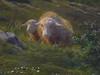 BONHEUR Rosa,1864 - Berger des Pyrénées (Condé) - Detail 31 (L'art au présent) Tags: art painter peintre details détail détails detalles 19th 19e painting paintings peinture peintures peinture19e 19thcenturypaintings 19thcentury tableaux orsay museum frenchpainters peintresfrançais nature figures figure bétail cattle livestock troupeau herd flock berger shepherd mouton sheep vache caw caws chèvre goat agneau lamb animal animals animaux herbe grass man hommes peasant paysan chapeau hat paysage landscape mountain mountains montagne france béret beret