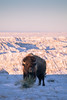 20180224-IMG_2165 (Wyatt Ryan) Tags: badlands badlandsnationalpark badlandsnps nps bnps southdakota exploresouthdakota hifromsd explore exploration explorer exploring hiking winter snow snowy wintery nationalpark nationalparks travel traveler travelphotography adventure adventurephotography adventurephotographer animal animals bison buffalo wild wildlife wilderness nature naturephotography natural mothernature beautiful astrophotography astro moon moonlight south stars star bighornsheep bighorn landscape landscapes sunrise sunrises sunshine sunny cloudy clouds