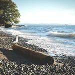 beach next to UBC - Strand nahe der UBC thumbnail