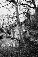 Talysarn Cottage (ShrubMonkey (Julian Heritage)) Tags: talysarnhall dorothea quarry house slate disused derelict abandoned forgotten ruin ruined eerie landscape wales building secluded isolation mountains snowdonia cottage nantlle monochrome tree bw home dereliction overgrown