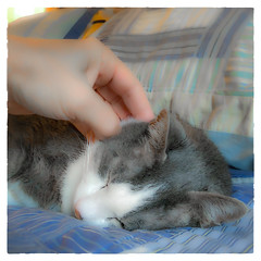Yesssssssssss.......... (Timothy Valentine) Tags: cat happycaturday quinnomannion 0318 home 2018 eastbridgewater massachusetts unitedstates us
