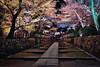 三井寺,滋賀縣,日本, Japan (Vincent_Ting) Tags: 三井寺 滋賀縣 日本 japan 櫻花 夜櫻 nightscene 琵琶湖 關西 architecture cherry cherryblossoms kansai
