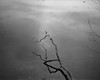 Weather Vane (Mark Swanson Photography) Tags: limb lake water tree peace death sinking sad drown