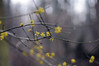 HBW 11/2018 (Frau Koriander) Tags: hbw happybokehwednesday bokehwednesday bokeh dof tree treebranches äste zweige sträucher gelb yellow nikond300s depthoffield spring frühling seasons jahreszeiten frühjahr parkschönbusch aschaffenburg bayern bavaria geäst nature natur schärfeverlauf schärfentiefe 60mm nikkoraf6028 baum blossoms bloom blooming bloomingtree blossom yellowbloomingtree soft park parc