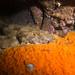 Troglodyte - Spotted wobbegong - Orectolobus maculatus #marineexplorer