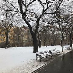 Chegamos em Praga com neve! ☃️❄️ #Prague #czechrepublic #praga #praha #snow #neve #white #park #street #europe #travel #trip #viagem (jpcamolez) Tags: chegamos em praga com neve ☃️❄️ prague czechrepublic praha snow white park street europe travel trip viagem