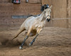 947Z1819 copy (M.J. Hencher) Tags: horse equestrian equestrianphotography actionphotography