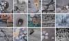 Skye Textures (.mushi_king) Tags: skye fuji xt2 texture scotland uk stones beach montage photoshop fujiholics